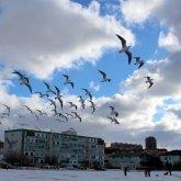 Актаусцы жаловались на странный запах: экологи говорят о загрязнении воздуха