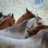 В Мангистауской области от голода погиблиболее 1000 лошадей. А куда смотрит Минэкологии?