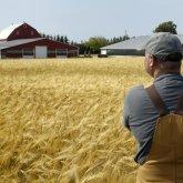 Государство намерено выбивать деньги у восточно-казахстанских фермеров