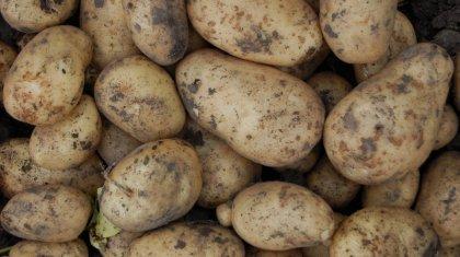 Что стало с ценами на картофель в Казахстане за ночь